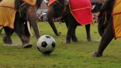 Indosport - Gajah bermain sepakbola.