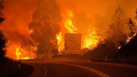 Kebakaran hutan di Portugal. - INDOSPORT