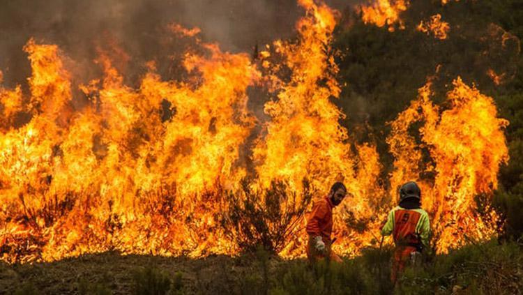 Cristiano Ronaldo membayar biaya pengobatan korban kebakaran di Portugal. Copyright: Barcroft Images