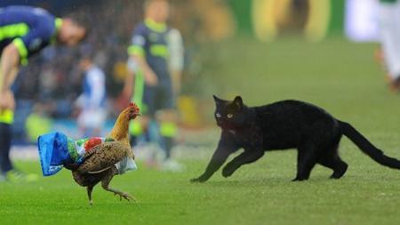 Hewan Lucu Yang Menghentikan Pertandingan Sepakbola. - INDOSPORT