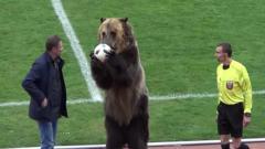 Indosport - Beruang digunakan sebagai pertunjukan di divisi tiga Liga Rusia
