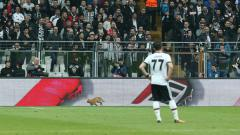 Indosport - Seekor kucing masuk lapangan dalam laga Liga Champions antara Besiktas vs Bayern Munchen.