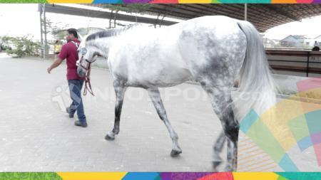 Kuda yang akan dipacu di Asian Games 2018. - INDOSPORT