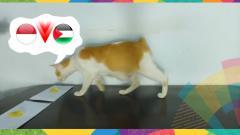Indosport - Seekor kucing memprediksi laga Indonesia vs UEA.