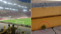 Indosport - Ganja ditemukan tumbuh subur di stadion Uruguay