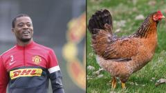 Indosport - Patrive Evra dikabarkan suka menjilat seekor ayam.