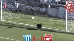Indosport - Seekor anjing buat penyelamatan gol.
