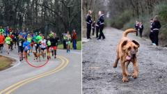 Indosport - Ludivine, anjing yang ikut dalam lomba lari maraton di Kanada.