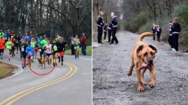 Ludivine, anjing yang ikut dalam lomba lari maraton di Kanada. - INDOSPORT
