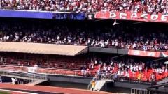 Indosport - Penonton jatuh dari tribun saat laga Sao Paulo kontra Gremio di Brasil.
