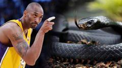 Indosport - Legenda basket NBA dan LA Lakers, Kobe Bryant yang meninggal dunia akibat kecelakaan helikopter menjuluki dirinya sendiri seperi ular jenis Black Mamba.