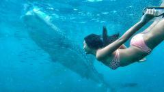 Indosport - Maria Selena berenang bareng Hiu Paus di laut lepas.