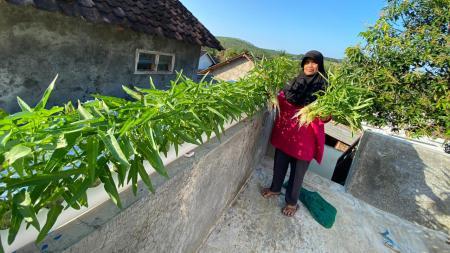 Sayuran yang ditanam Hari Nur dengan metode hidroponik. - INDOSPORT