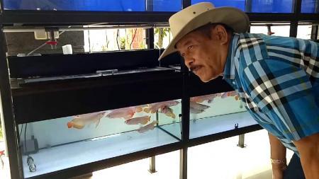Komisaris PT Persib Bandung Bermartabat (PBB), Umuh Muchtar, mengisi waktu luangnya dengan bisnis ikan arwana. - INDOSPORT