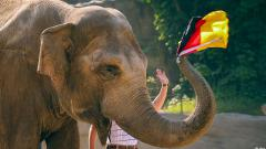 Indosport - Gajah Yashoda memberikan ramalan yang akurat di Euro 2020.