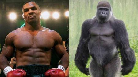 Mike Tyson dan seekor gorila - INDOSPORT