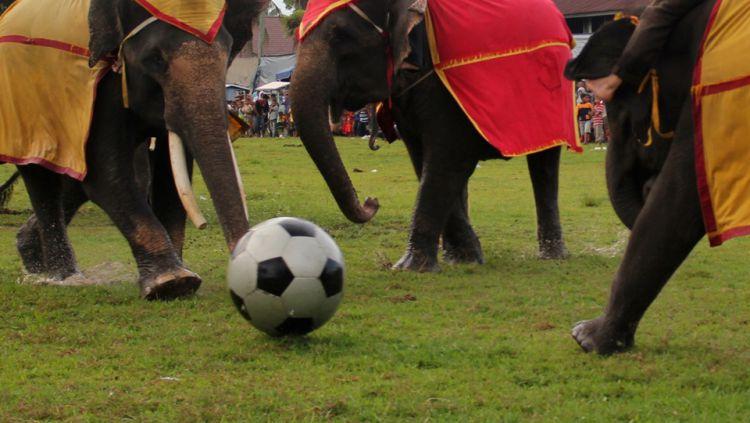 Gajah bermain sepakbola. Copyright: © INTERNET