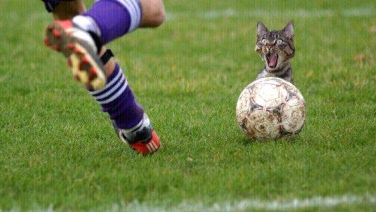 Meme sepakbola lucu bikin gemas warganet INDOSPORT