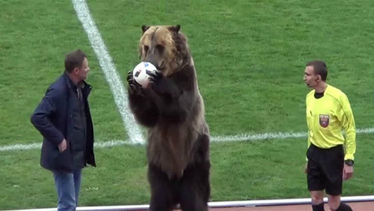Beruang digunakan sebagai pertunjukan di divisi tiga Liga Rusia Copyright: © foufourtwo