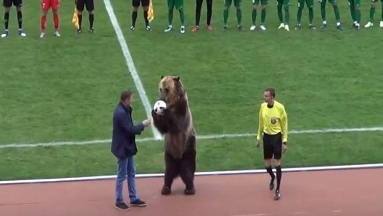 Tima, Beruang Sirkus di Sepakbola Rusia Copyright: © Youtube