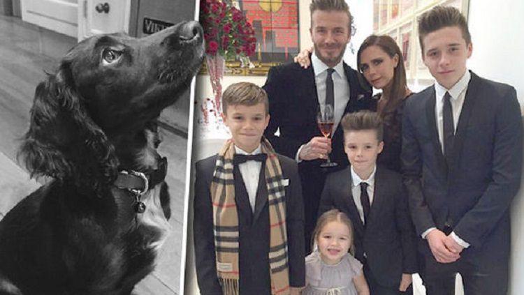 Keluarga David Beckham dan anjing kesayangannya Copyright: © Daily Express