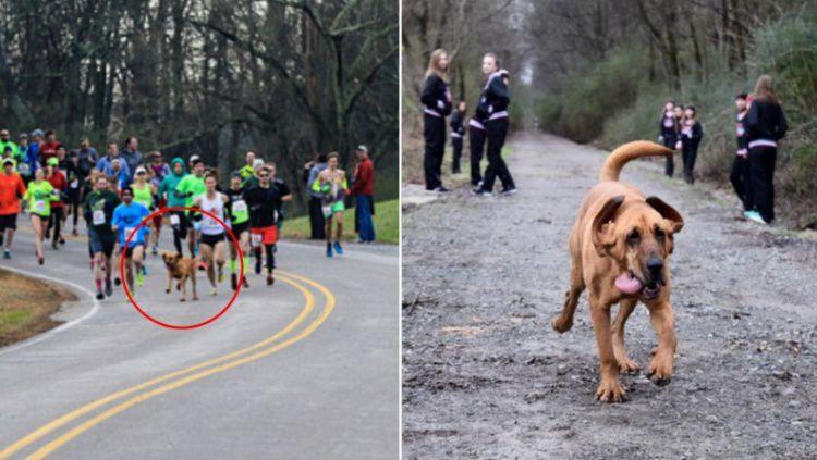 Ludivine, anjing yang ikut dalam lomba lari maraton di Kanada. Copyright: © Sport Bible